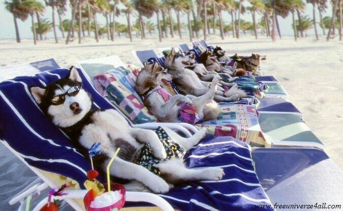 http://www.universdugratuit.com/elements/images/animaux/animauxsxv008.jpg