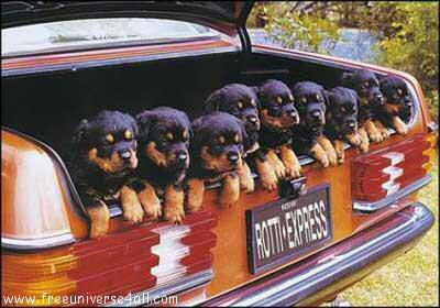 http://www.universdugratuit.com/elements/images/animaux/animauxtm023.jpg